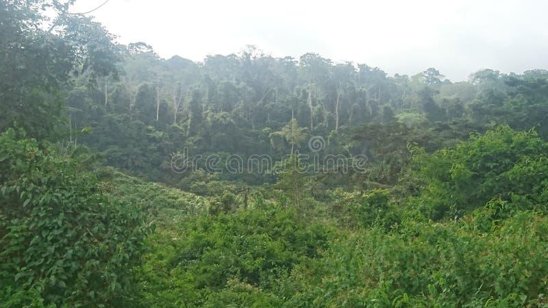 Тропический лес стоковые фото