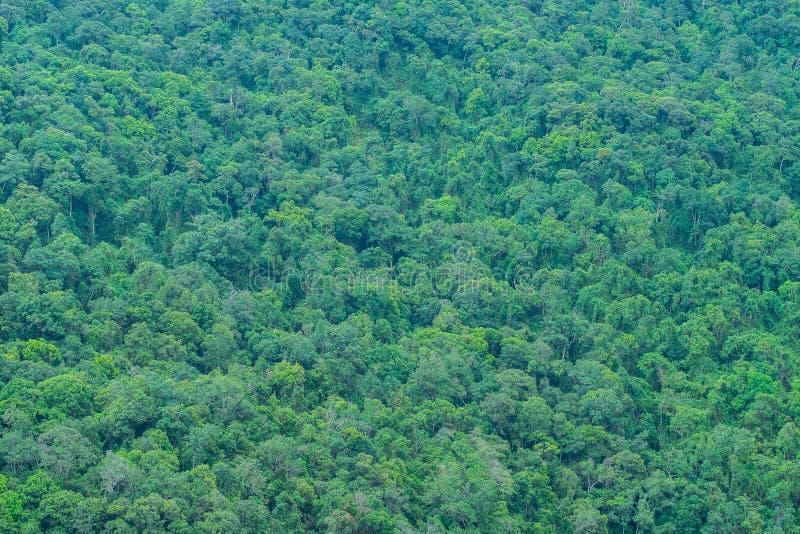 Тропический лес на наклоне горы стоковое изображение rf