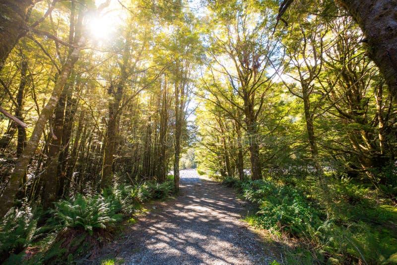 Тропический лес около падений Fantail, расположенных в национальном парке Mt Aspiring, вдоль шоссе HAAST в южном острове Новой Зе стоковое фото