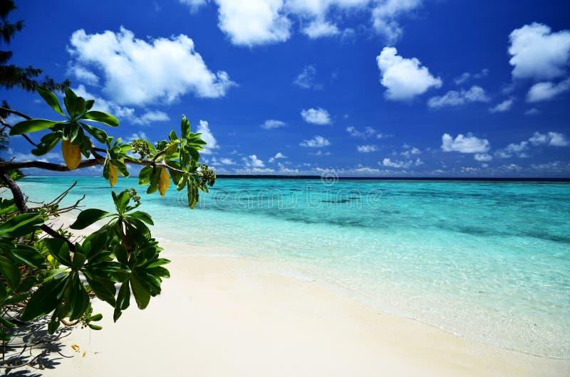 Тропический остров с водой бирюзы стоковое изображение rf