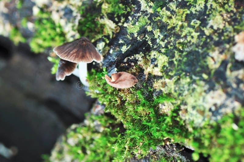 Тропический одичалый гриб стоковая фотография