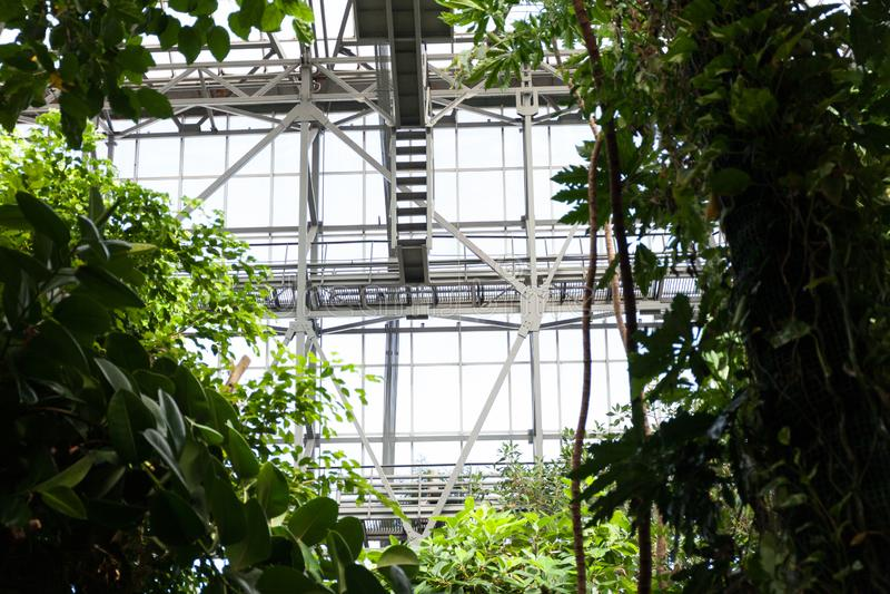 Тропический парник с сочными заводами на предпосылке стеклянных окон Концепция ботанического сада стоковая фотография