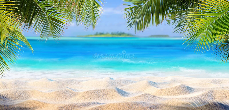 Тропический песок с листьями ладони стоковая фотография