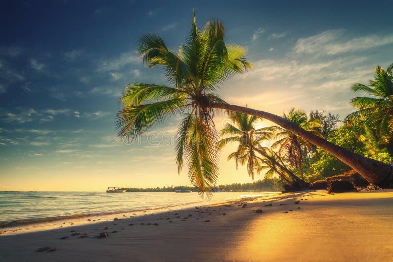 Тропический пляж в Punta Cana, Доминиканской Республике Пальмы на песочном острове в океане стоковые изображения rf