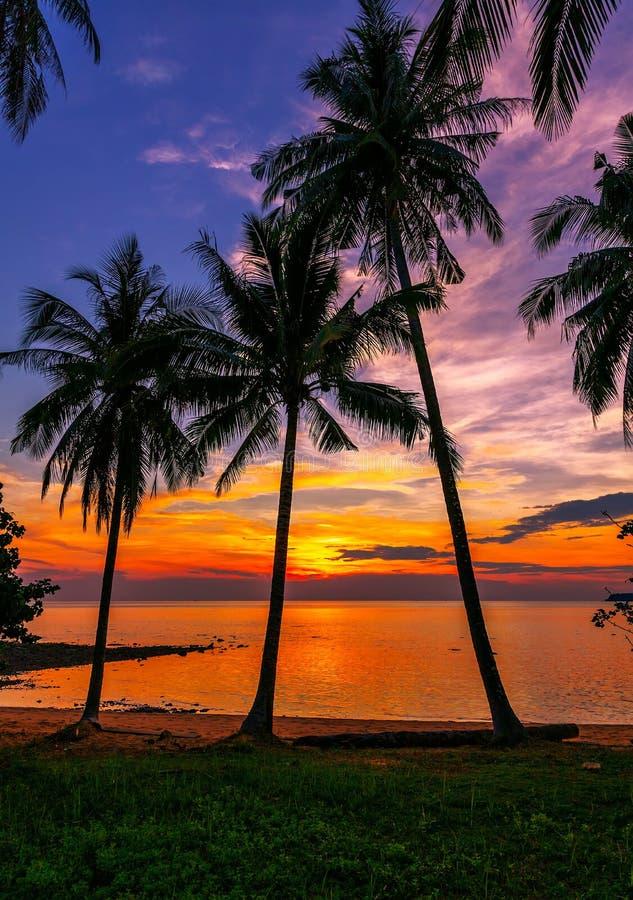Тропический пляж на заходе солнца стоковое фото rf