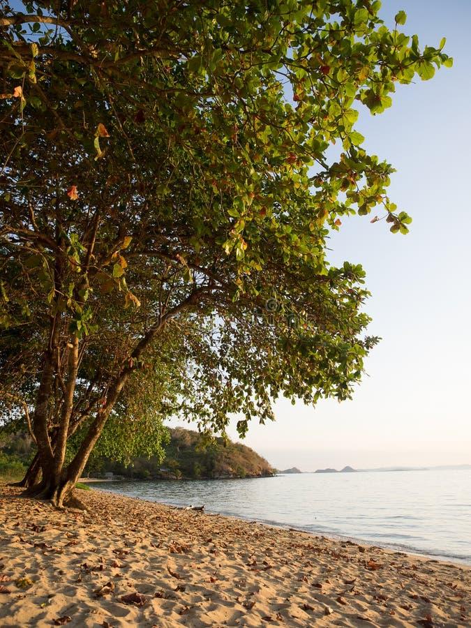 Тропический пляж на острове flores, Бали, Индонезии стоковое фото rf