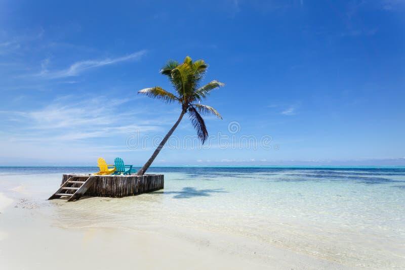 Тропический пляж рая с белым песком, пальмой и 2 шезлонгами стоковое изображение rf