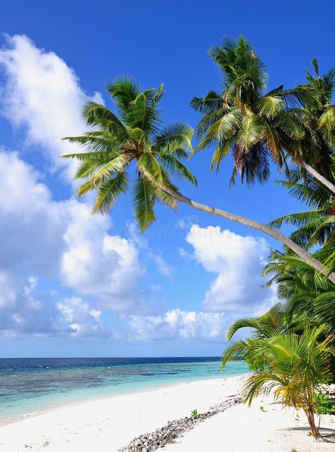 Тропический пляж с пальмами, Мальдивами стоковые изображения rf