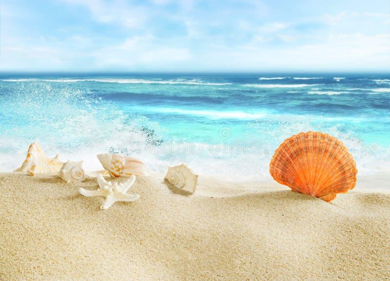 Тропический пляж с раковинами стоковое фото rf