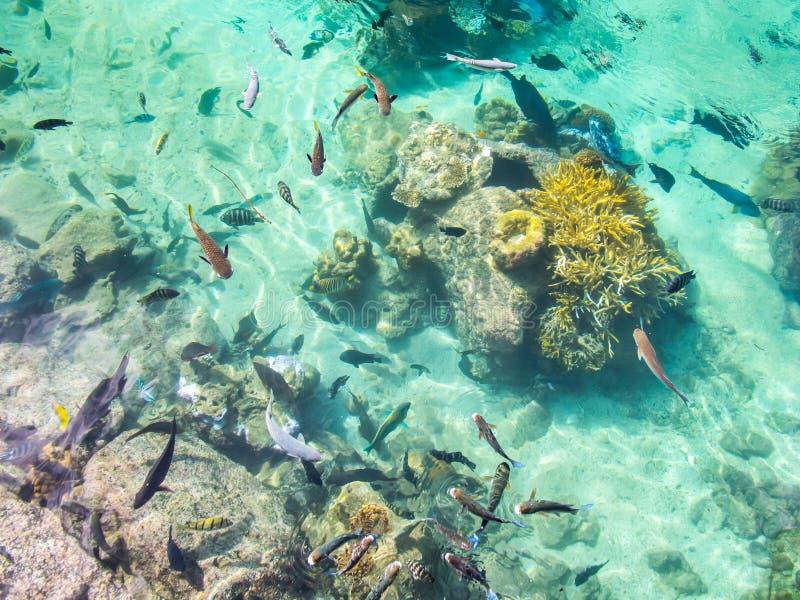 Тропический рыбный пруд на междуконтинентальной гостинице курорта и курорта в Папеэте, Таити, Французской Полинезии стоковая фотография rf