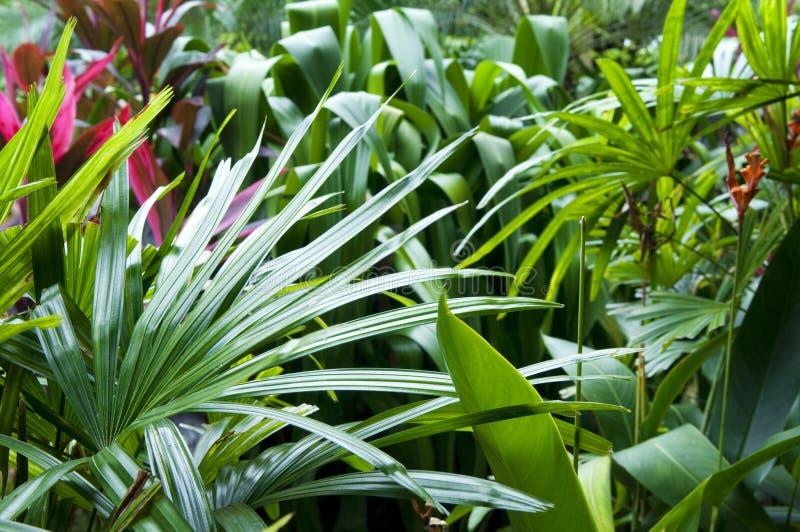 Тропический сад стоковая фотография