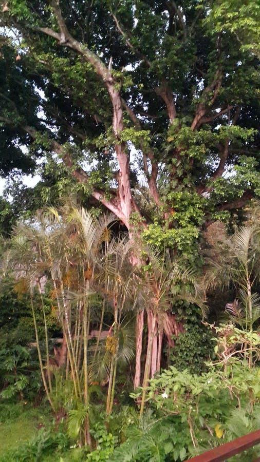 Тропический сад джунглей стоковая фотография rf