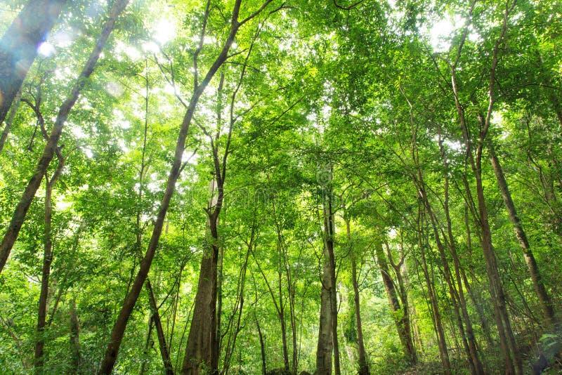 Тропический тропический лес Стоковая Фотография RF