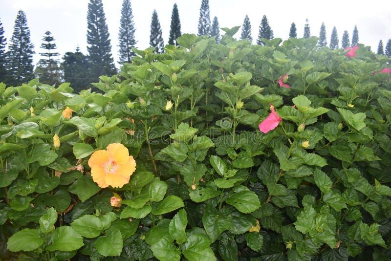 Тропический цветок с яркими яркими цветами стоковое фото