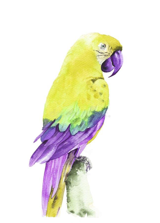 Тропический Ara летая попугая Иллюстрация руки акварели вычерченная стоковая фотография rf