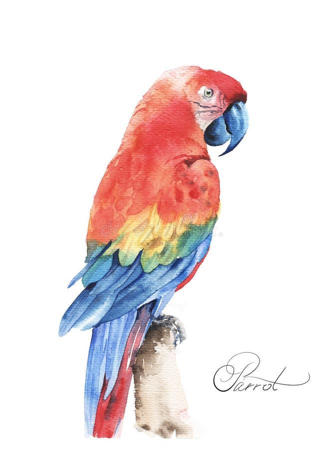 Тропический Ara летая попугая Иллюстрация руки акварели вычерченная стоковые фотографии rf