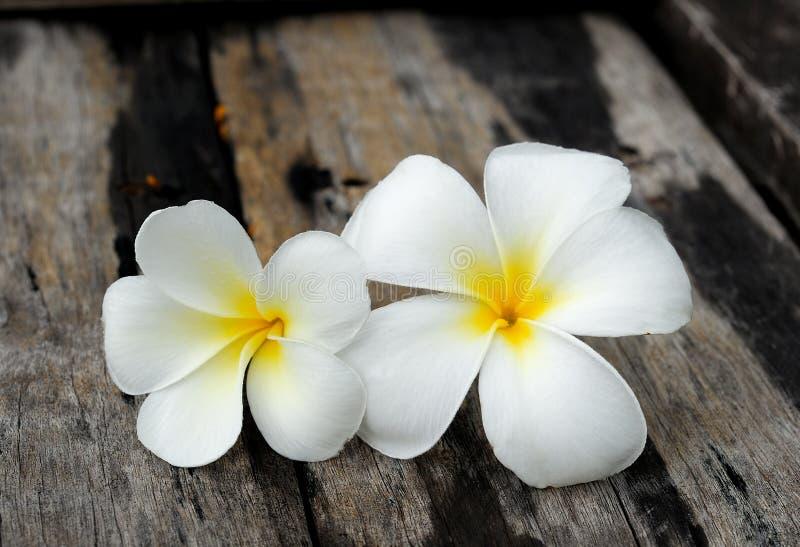 Тропический frangipani цветков на древесине стоковое изображение