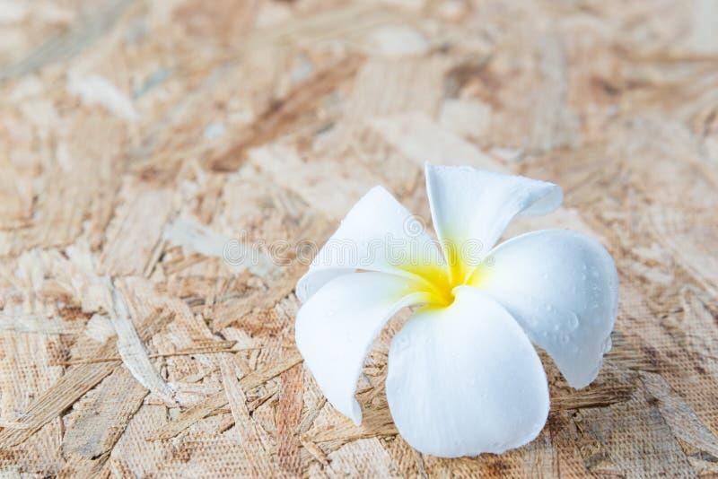Тропический frangipani цветков на древесине стоковое фото