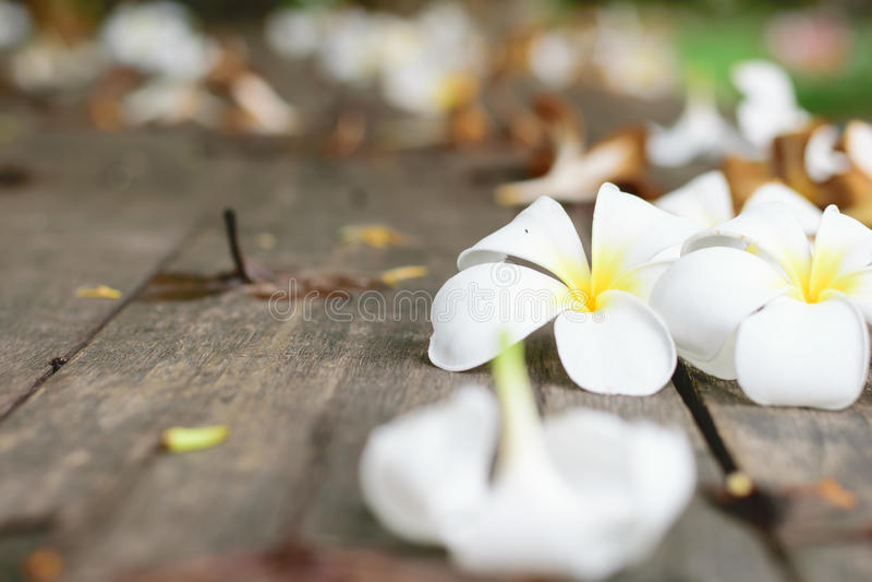Тропический Plumeria цветков на древесине стоковое изображение