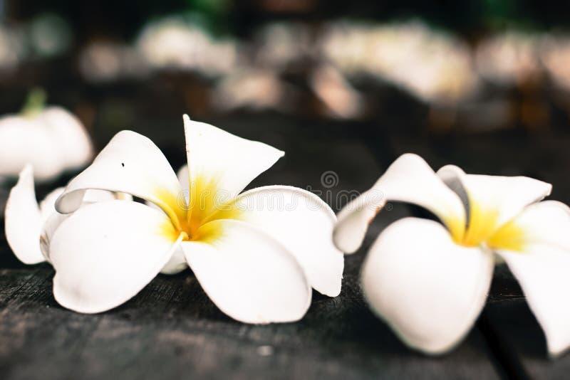 Тропический Plumeria цветков на древесине стоковая фотография rf
