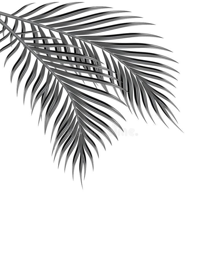 2 тропических листь ладони черная белизна белизна изолированная предпосылкой иллюстрация иллюстрация вектора
