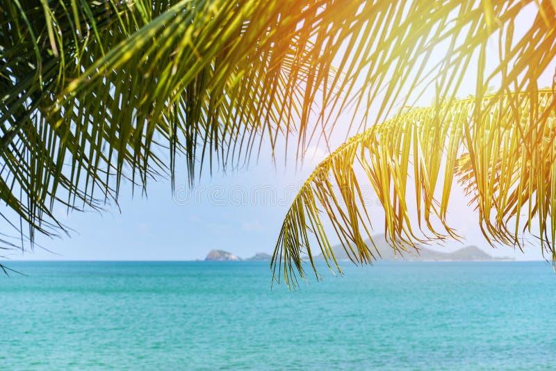 Тропическое море пляжа с океаном солнечного света пальмы кокоса на небе лета голубом и острова/отдыхают предпосылка праздников стоковая фотография