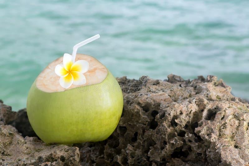 Тропическое освежение кокоса стоковые фотографии rf