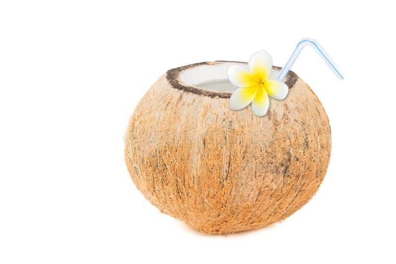 Тропическое освежение кокоса стоковое изображение rf