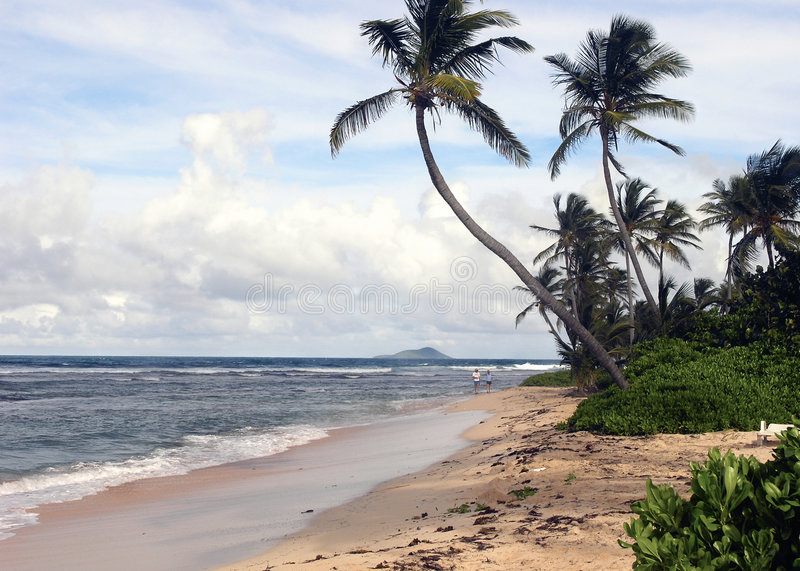 тропическое пляжа идилличное стоковая фотография