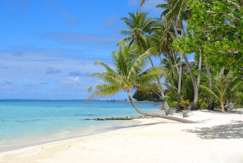 тропическое пляжа мечт стоковое фото rf