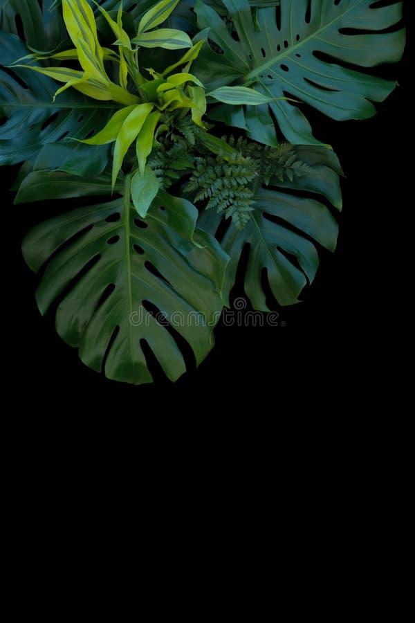 Тропическое украшение листьев на черной предпосылке, папоротнике, monstera, стоковое фото rf