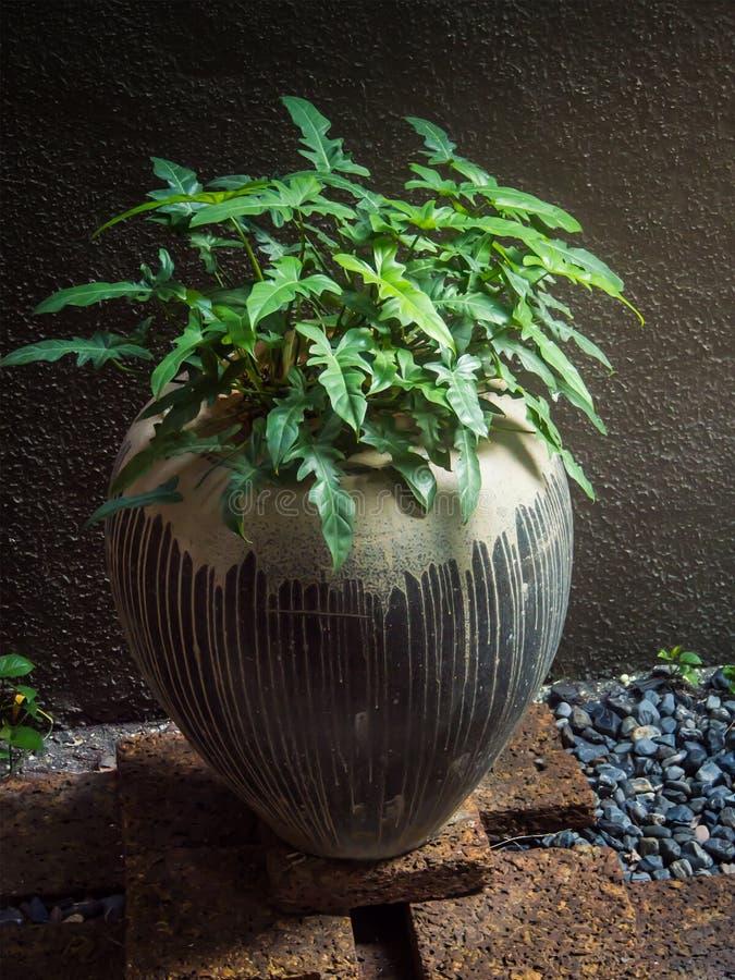 Тропическое украшение сада стоковая фотография rf