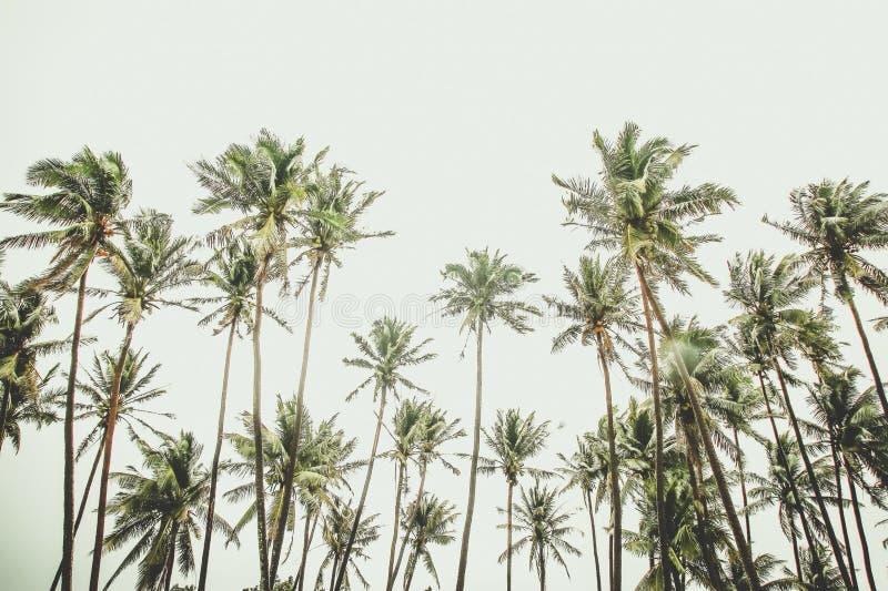 тропическо стоковая фотография rf