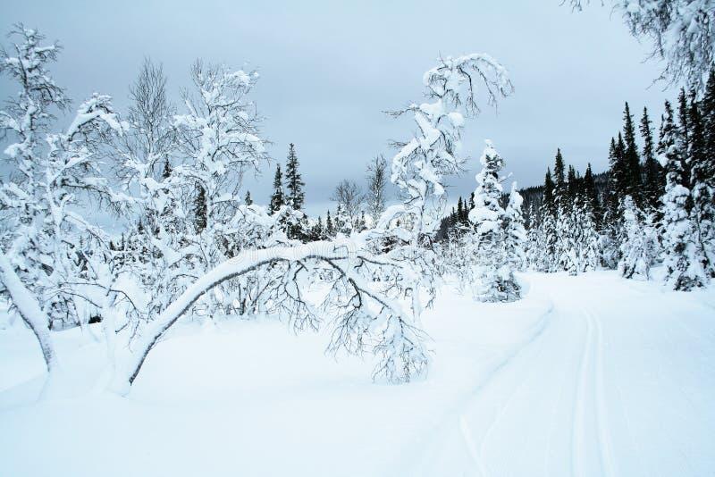 тропка катания на лыжах страны перекрестная стоковое фото rf