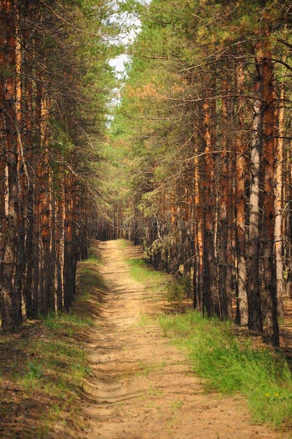 тропка России пущи осени предыдущая стоковое изображение