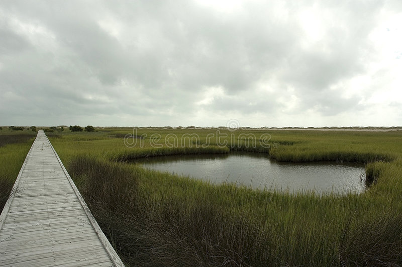 тропка соли болотоа стоковое изображение