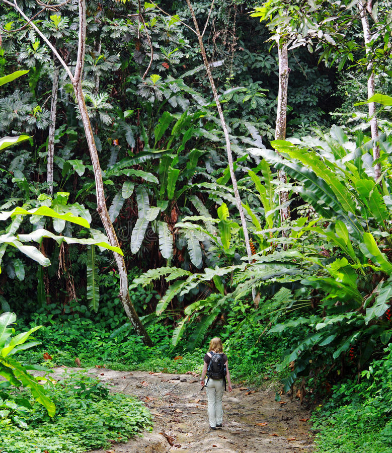 тропка Тринидад джунглей стоковые фото