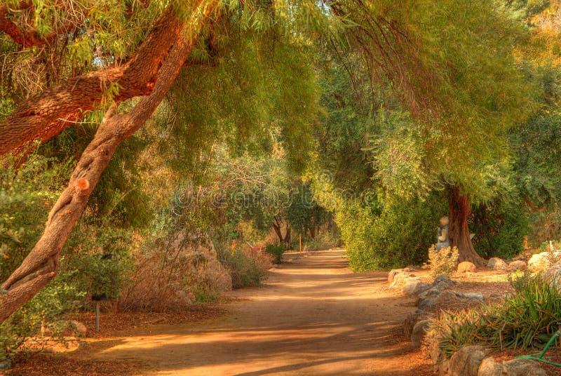 тропка 2 джунглей стоковое фото rf