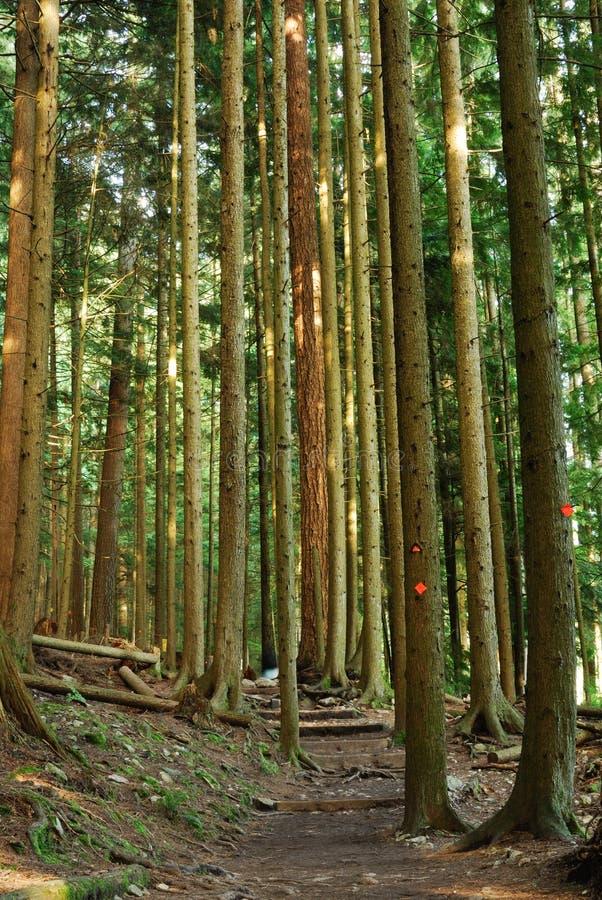 тропка grouse молотилки hiking стоковая фотография rf
