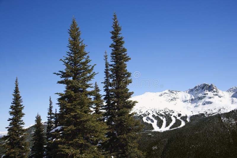 тропки лыжи горы сценарные стоковая фотография