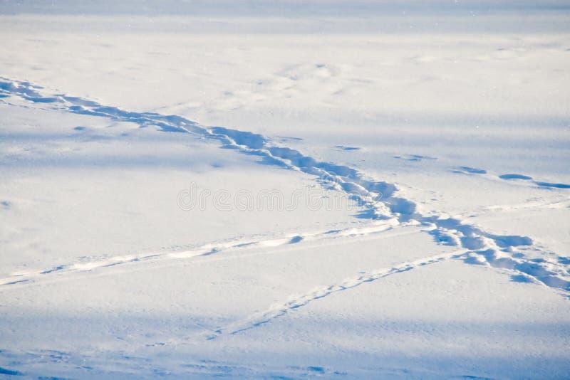 тропки снежка стоковая фотография rf