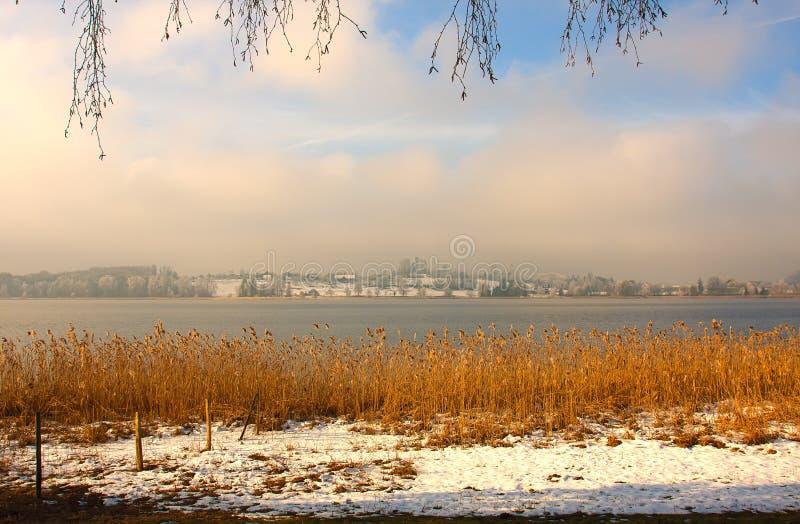 Тростники бечевника в зиме стоковая фотография rf