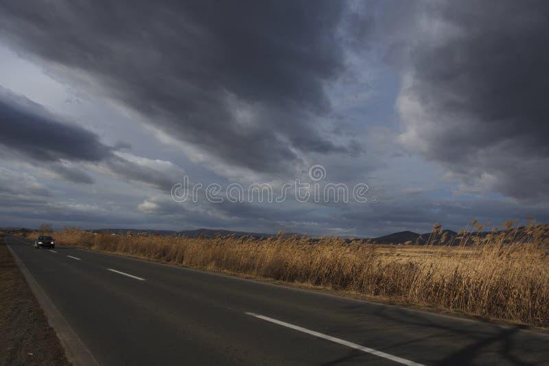 Тростники вдоль дороги под облачным небом Ландшафт осени стоковые фотографии rf