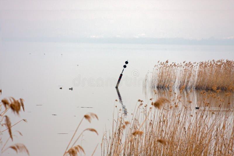 Тростники в ветре на озере в зиме стоковое изображение rf