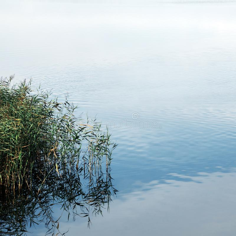 Тростники в воде Отражение неба и облаков стоковые фотографии rf