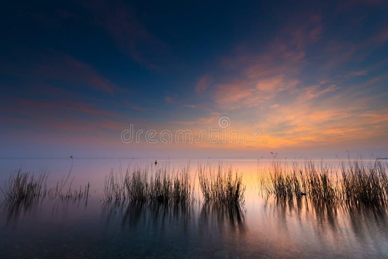 Тростники в озере на заходе солнца стоковые фото