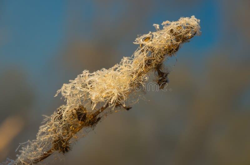 Тростники в осени болота рано утром стоковое изображение