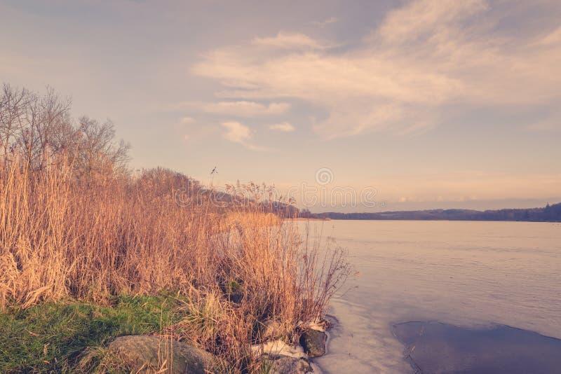 Тростники замороженным озером стоковое фото rf
