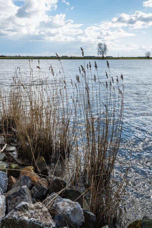 Тростники и валуны на банках реки стоковые изображения