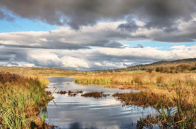 Тростники и вода на мхе Leighton, Lancashire стоковые изображения